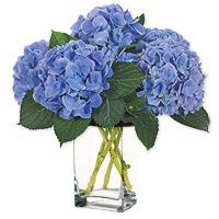 HydrangeaBouquets