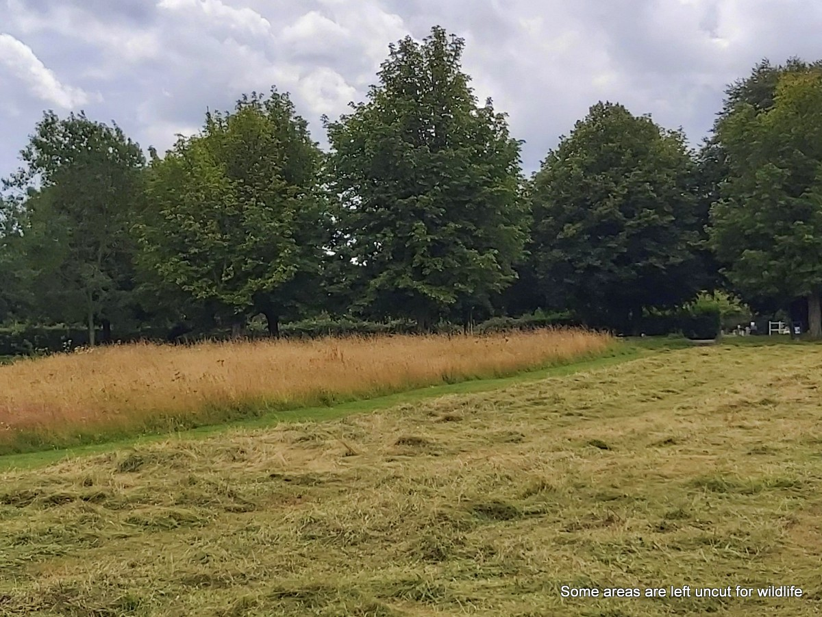 hay making and wildlife areas, Marlborough Common, July 2020